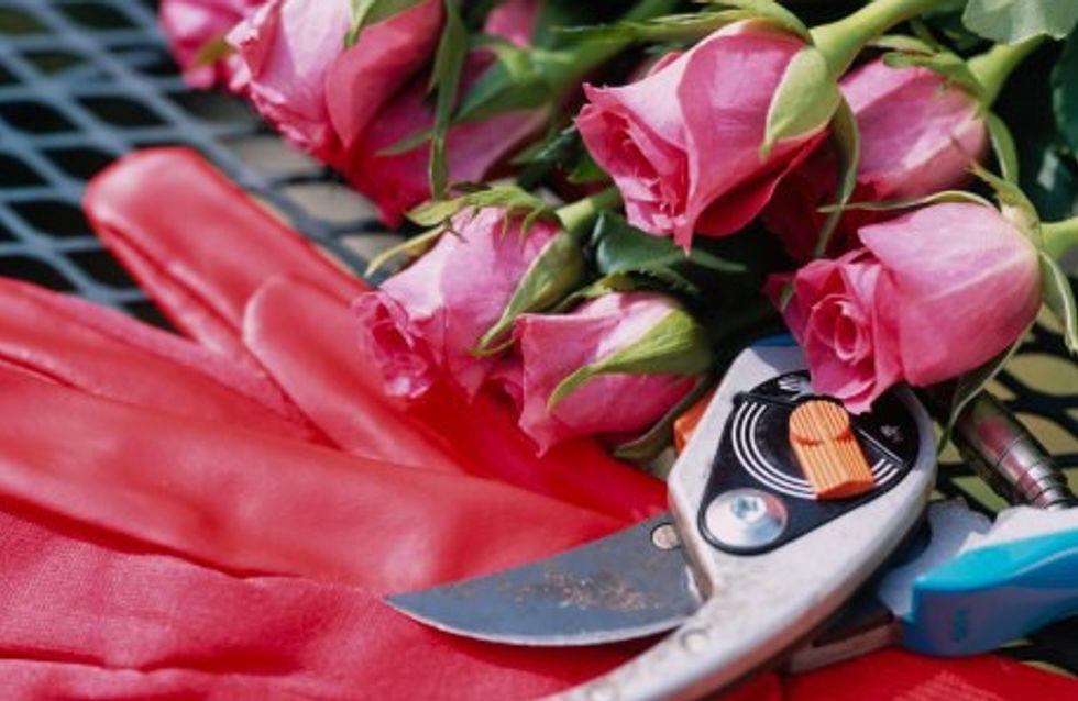 Bien tailler ses rosiers