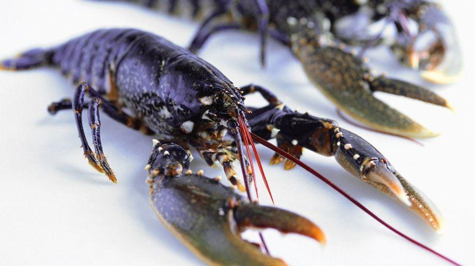 Le homard, superstar des grandes occasions