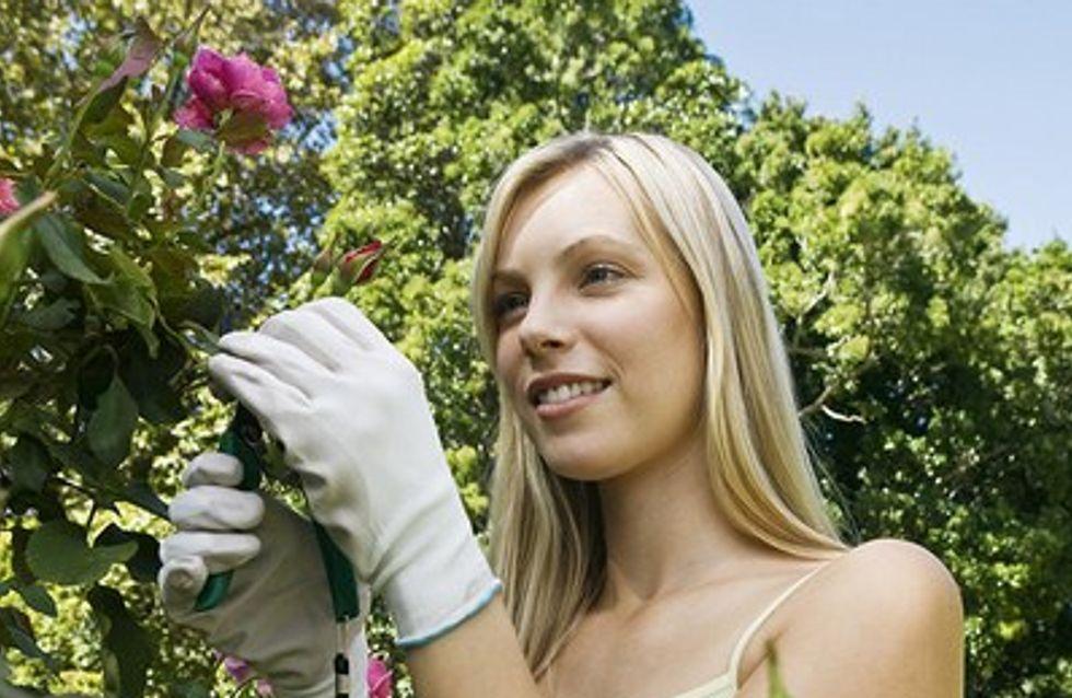 Comment protéger ses rosiers du froid ?
