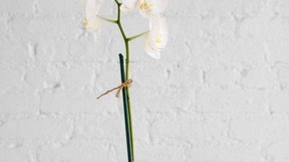 Bichonnez vos plantes d'intérieur