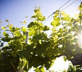 10 notions à connaître avant de se lancer dans la foire aux vins !