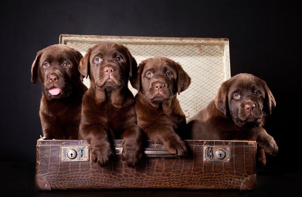 Passaporto? Mal d'auto? Le cose da sapere prima di mettersi in viaggio con il proprio cane