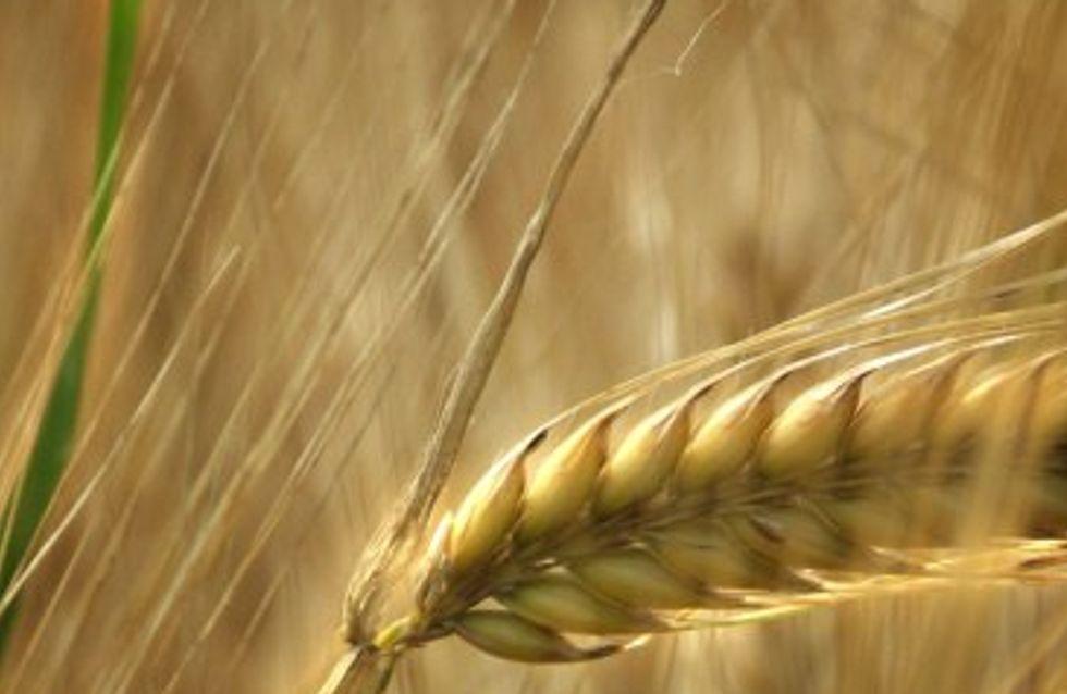 Les céréales complètes : pourquoi et comment ?