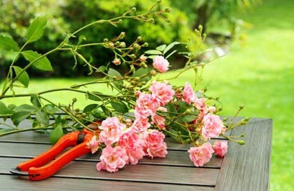 Tous les secrets de la taille du rosier buisson