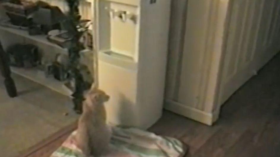 Wir können unseren Augen kaum trauen! Was diese Katze macht, ist geradezu unheimlich!