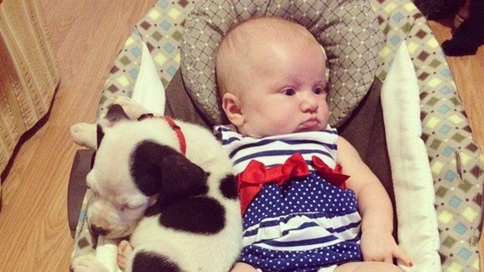 Este bebé y su cachorrito pitbull son inseparables a la hora de la siesta, ¡para comérselos!