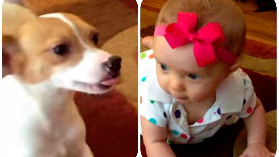 Cachorrinho fofo ensina bebê a engatinhar ♡