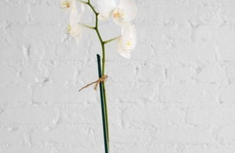 Coccolare le piante da appartamento