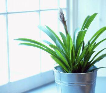 Come prendersi cura delle piante da appartamento?