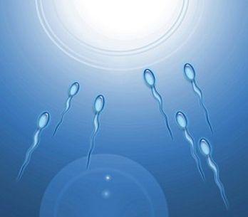 La crisi degli spermatozoi