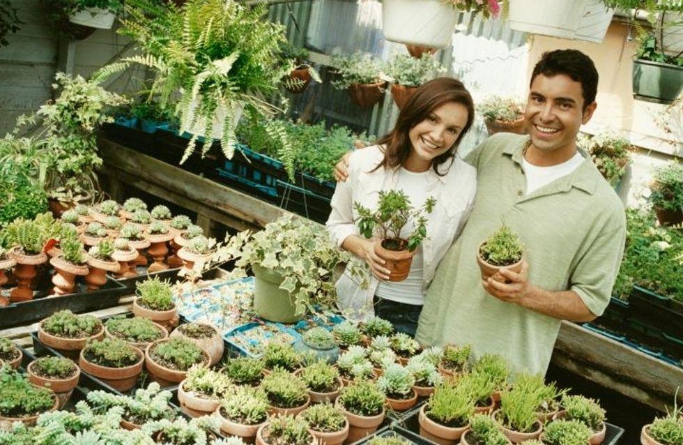 Le piante grasse: come sceglierle e prendersene cura