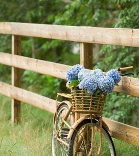 L'ortensia: le varietà, la cura e le curiosità