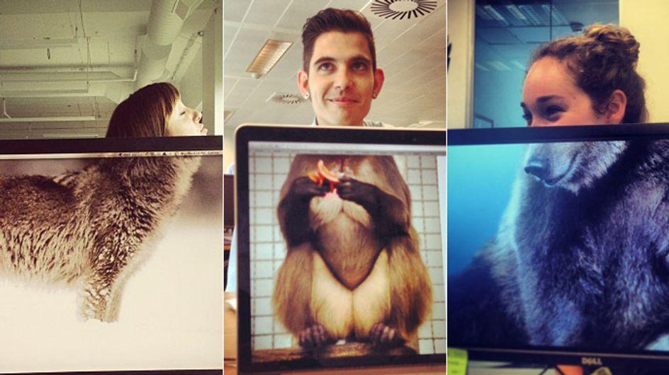 Wohnzimmer-Safari gefällig? So lustig, günstig und vor allem einfach brüllt ihr mit Affen und heult mit Wölfen