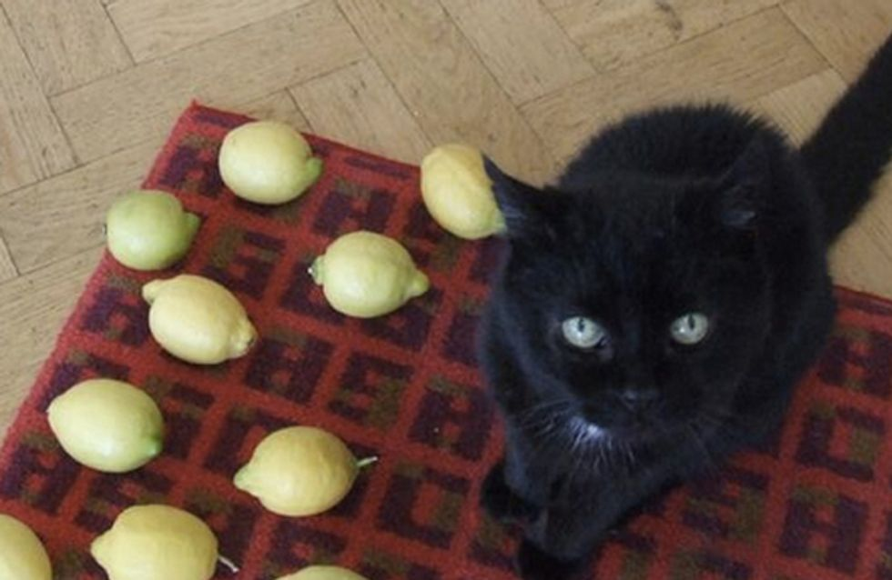 The Best Twitter Account Of All Time. 'Why My Cat Is Sad'