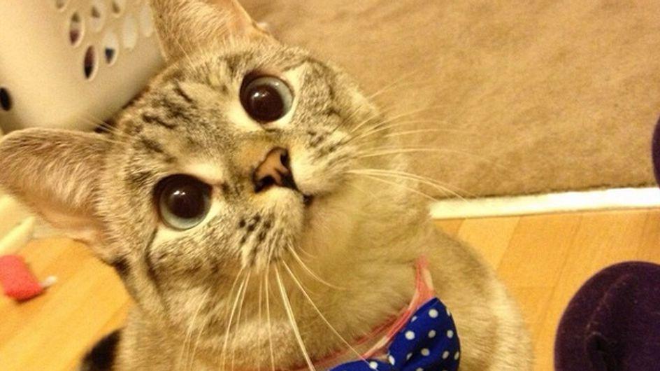 La gatita Nala tiene 1.300.000 seguidores en Instagram, ¡tiembla Kim Kardashian!