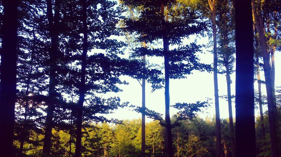 Weekenduitje: een barbecue temidden van het bos