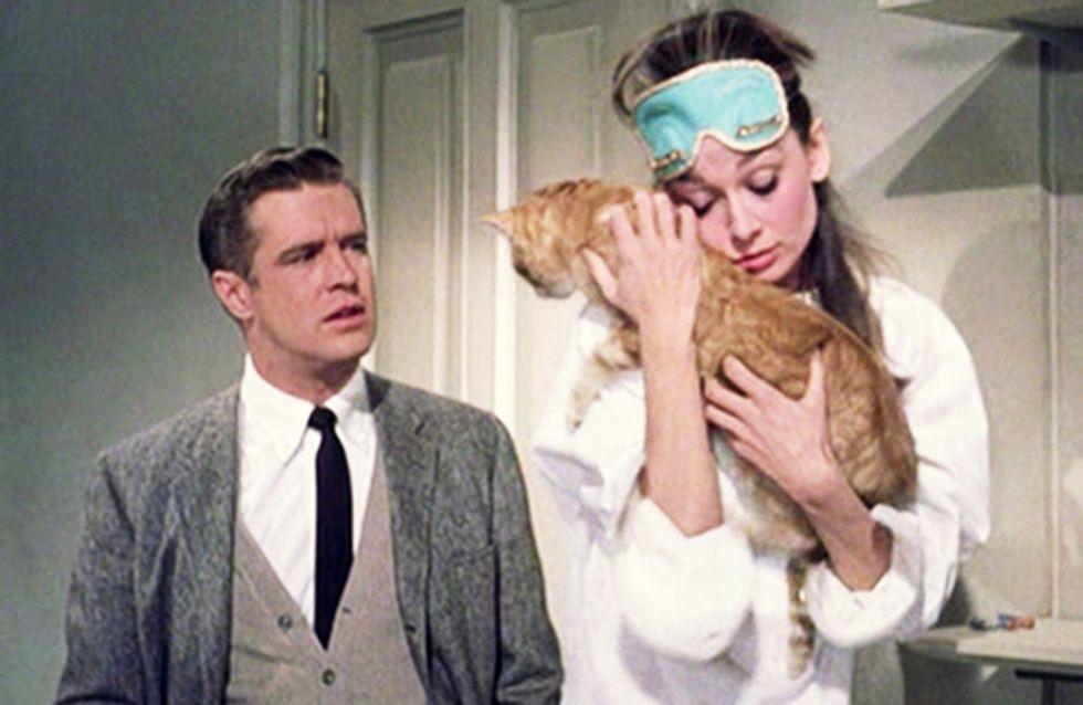 17 redenen waarom je kat beter is dan je vriendje
