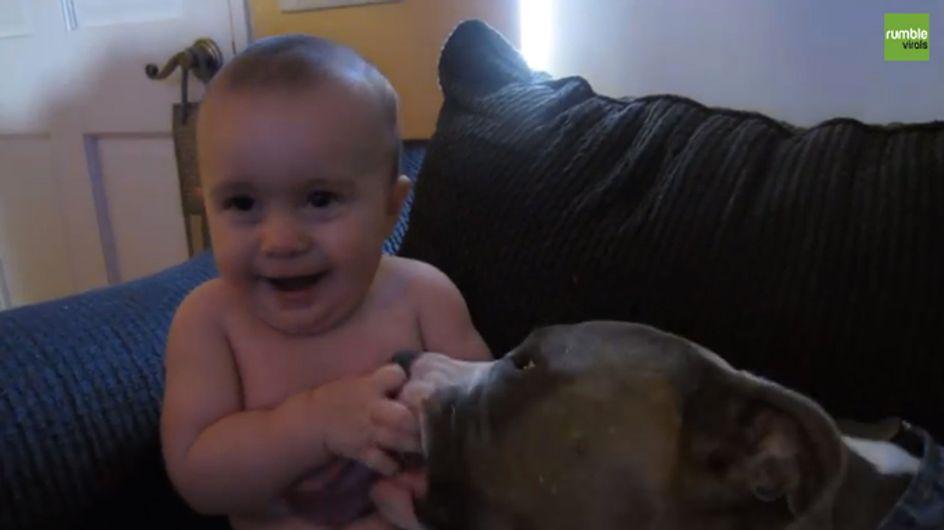 Video/ Coccole e bacini: le tenerezze tra un bimbo e il suo pit bull... da non credere!