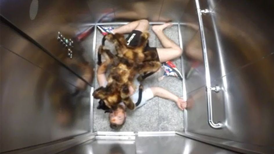 Spider Dog Is The Most Terrifying Prank Of All Time