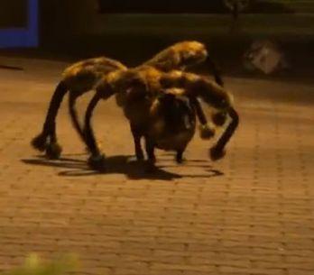 El terrorífico perro araña: la broma que ha revolucionado Youtube