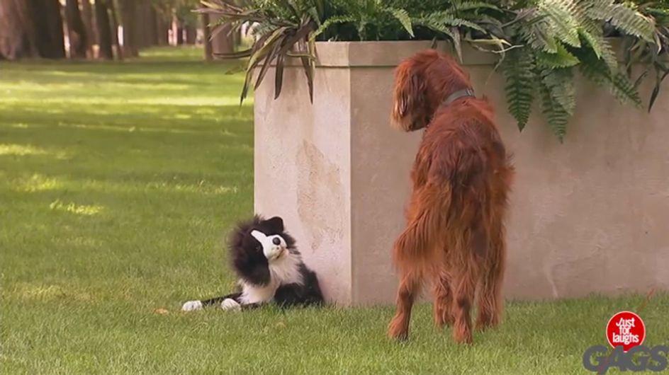 Video/ Gli scherzi? Non si fanno solo agli esseri umani... questi cani ne sono la prova!
