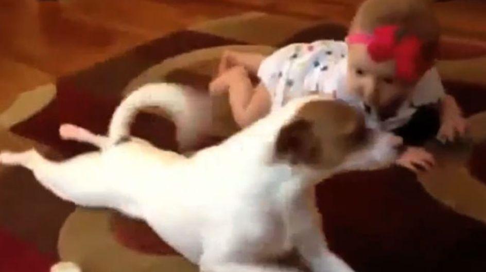 So süß! Der beste Beweis, warum Hunde großartige Babysitter sind!