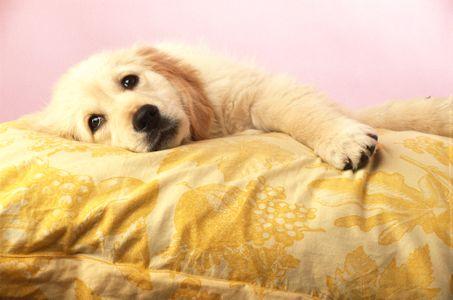 Dormir avec un animal pourrait limiter les risques d'allergie