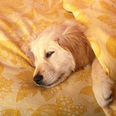 Dormir avec son animal de compagnie, un atout pour notre santé ?