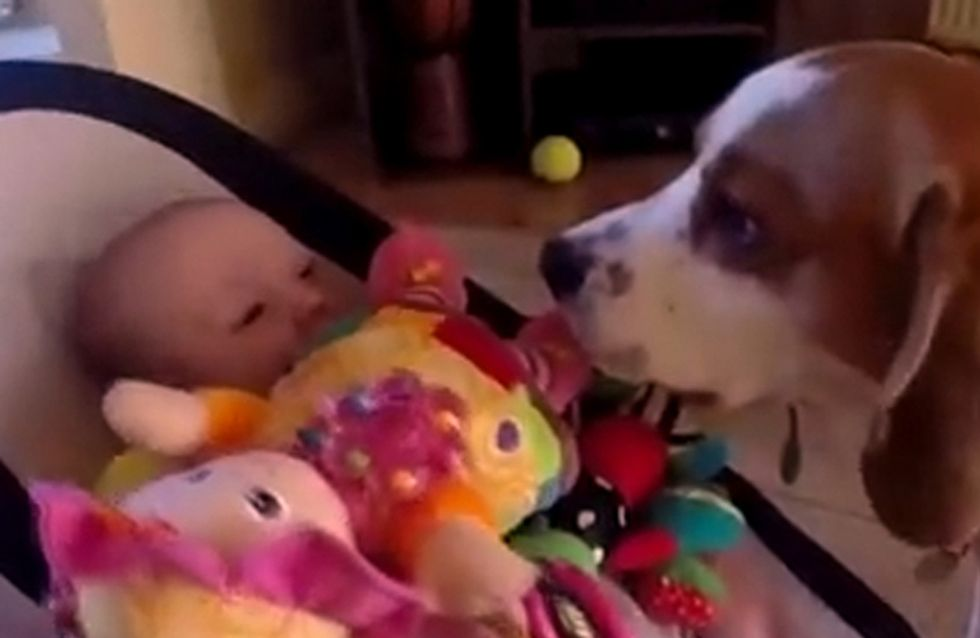 Guilty Dog Showers Baby With Presents After Making Her Cry