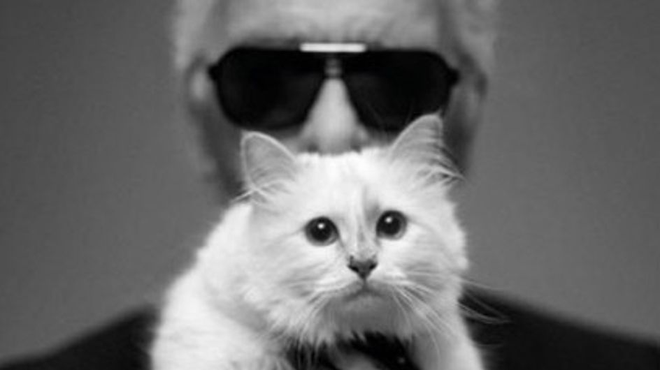 """""""Vorrei sposare Choupette"""". Karl Lagerfeld racconta l'amore per il suo gatto in un libro"""