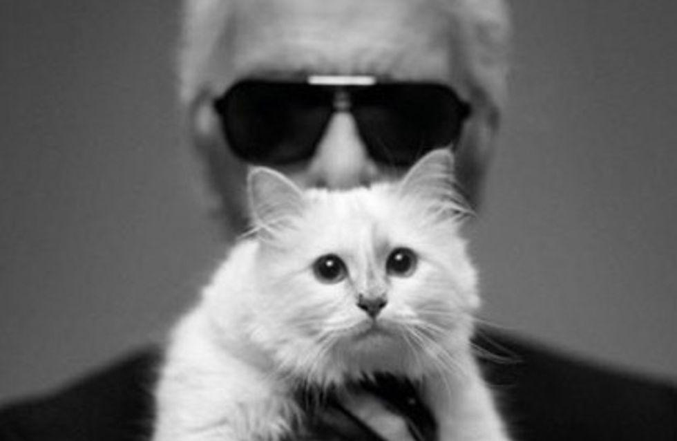 Vorrei sposare Choupette. Karl Lagerfeld racconta l'amore per il suo gatto in un libro