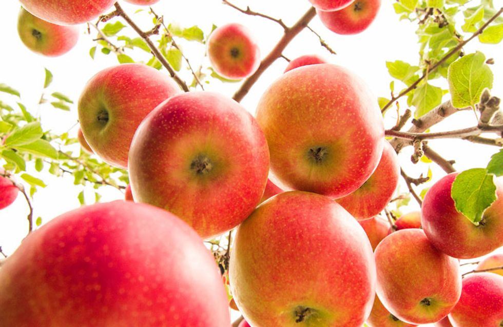 How D'you Like Dem Apples: Tesco To Launch Mad New Pink Apples