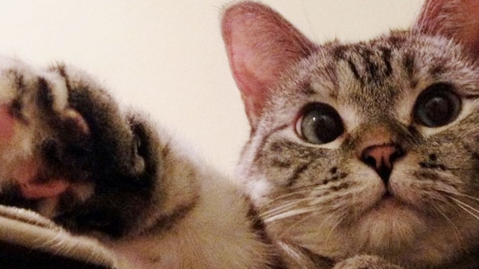 Meet The Cat Who Has Beaten You At Life