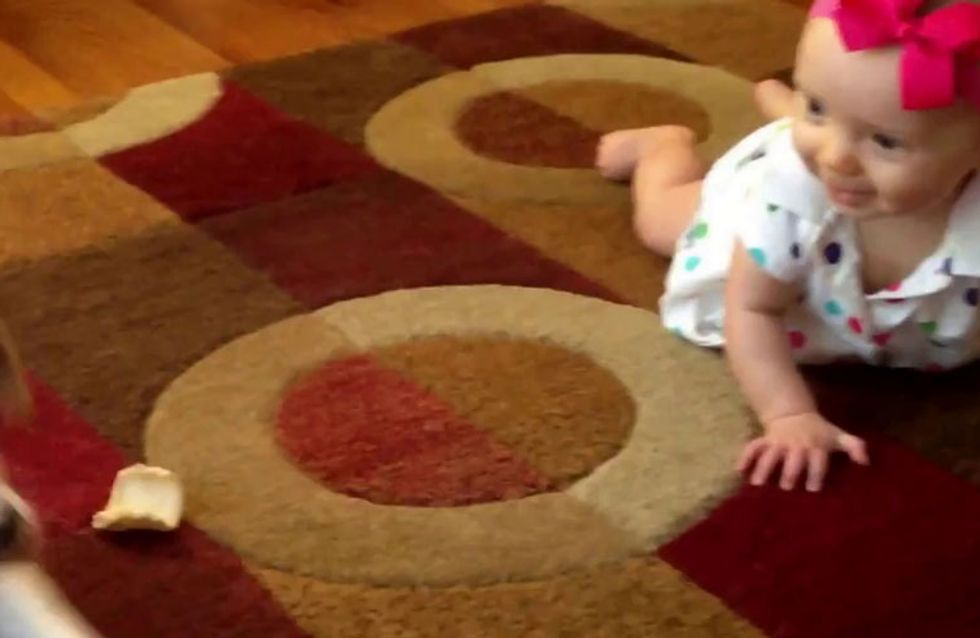 Cute Overload: Tiny Dog Teaches Baby How To Crawl