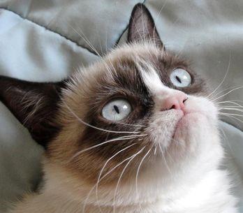 Ces gifs de chats qui nous font mourir de rire