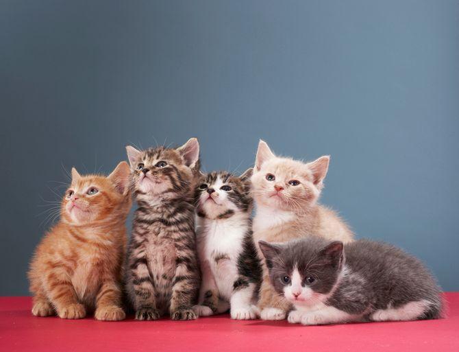 Les chats sont-ils trop nombreux en Suisse ?