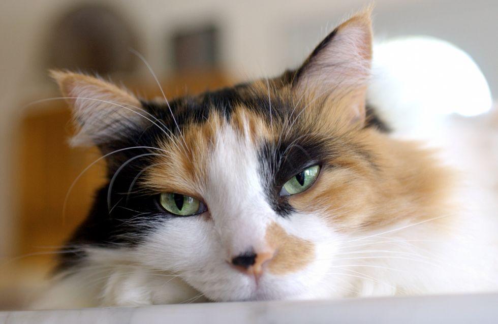 Insolite : Vers une politique du chat unique en Suisse ?