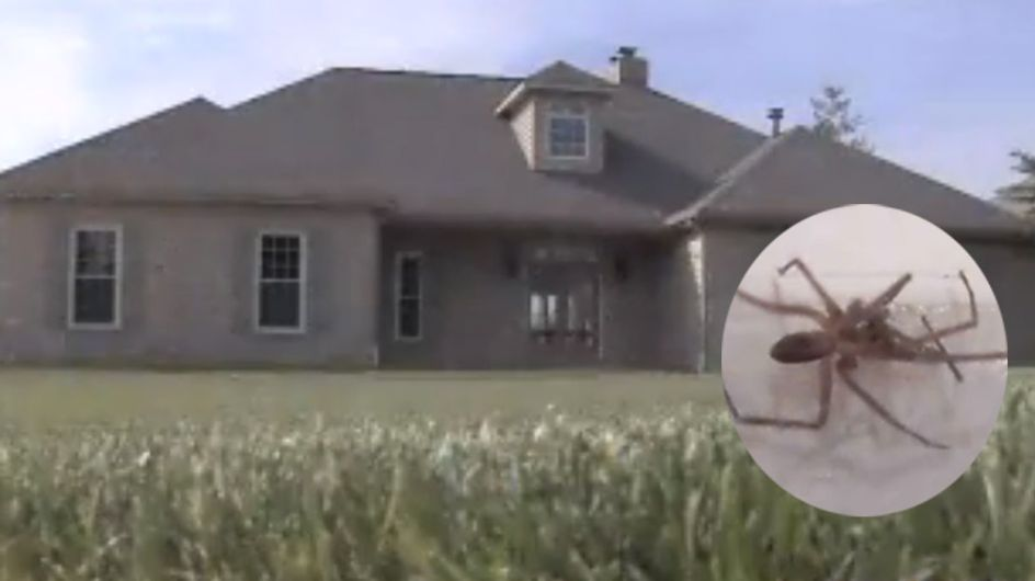 Das ist ein wahrer Albtraum: Eine Familie muss ihr neues Haus verlassen - wegen 6000!!! Spinnen