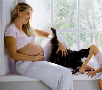 15 idées reçues sur la toxo pendant la grossesse