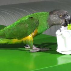 Video/ Il pappagallo che si allena a fare la mamma perfetta!
