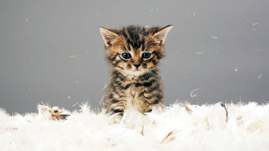 Pause tendresse avec des chats trop craquants