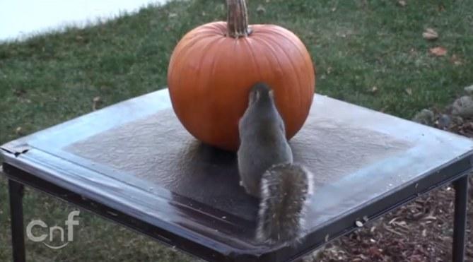 Lo scoiattolo che intaglia la zucca