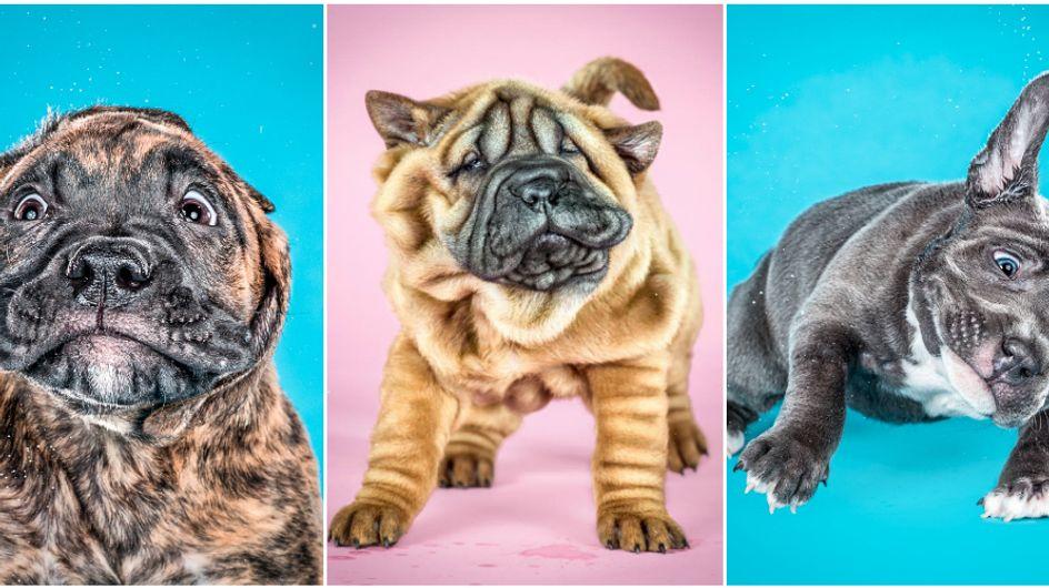 Video/ Shake Puppies: la tenerezza dei cuccioli in slow motion