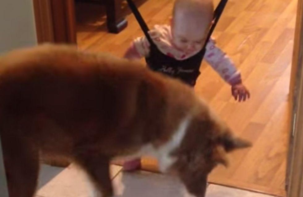 Hund oder Kind: Wer wird wohl das Hüpf-Duell für sich entscheiden?