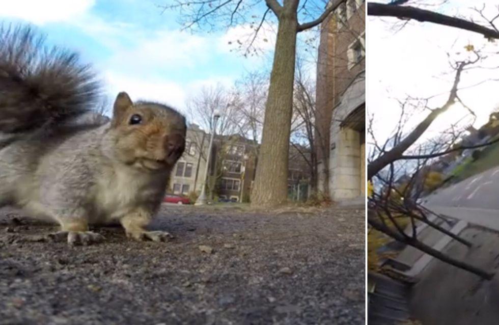 Ganz schön frech! Was sich dieses Eichhörnchen traut, ist unglaublich witzig!