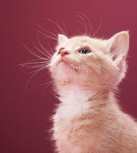 10 motivi per scegliere un gatto come amico a quattrozampe