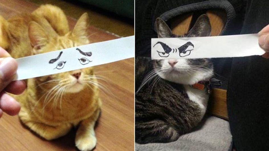 Schau mir in die Augen, Kleines: So habt ihr Katzen noch nie gesehen