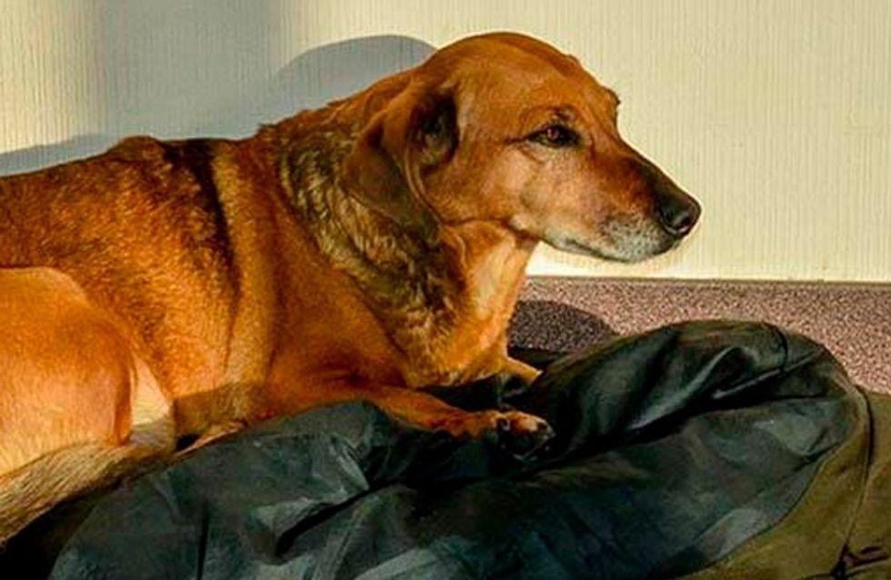Die Geschichte von diesem Hund bricht uns das Herz!