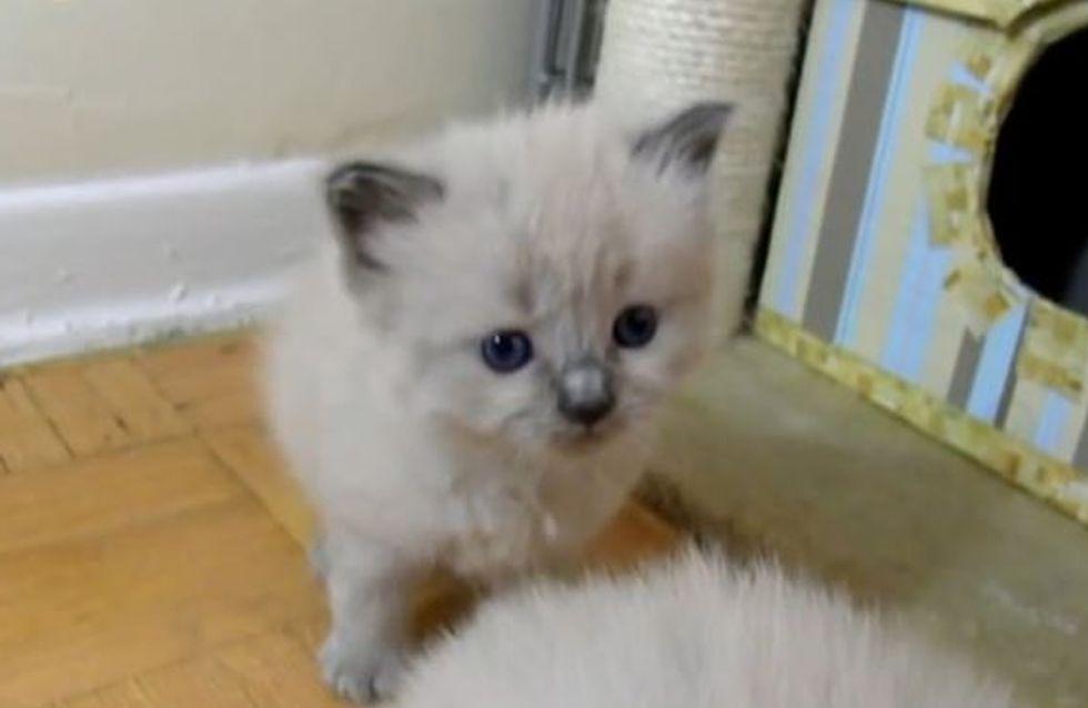 Große Kulleraugen und tapsige Schritte: Die süßen ersten Tage von 4 Katzenbabys