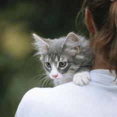 Pour lutter contre le cancer, regardez des vidéos de chats !